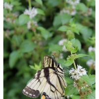 1278 PHOTOS: Butterflies