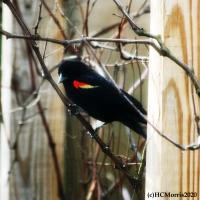 A Passerine Bird