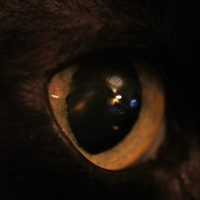 through my cats eye