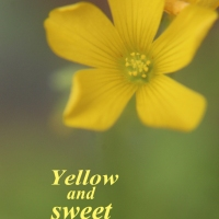 yellow and sweet